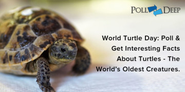 World Turtle Day Poll & Get Interesting Facts About Turtles - The World's Oldest Creatures
